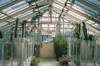 Rodzaje Sztucznego Oświetlenia Do Uprawy Roślin Led Czy Hps